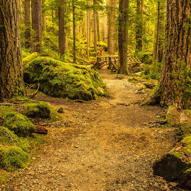 Serenity Bridge by Judi Kubes - Landscapes Forests ( washington, olympics, serene, green, trail, moss, trees, forest, bridge, renewal, forests, nature, natural, scenic, relaxing, meditation, the mood factory, mood, emotions, jade, revive, inspirational, earthly,  )