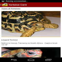 Screenshot of TORTOISE CARE 101