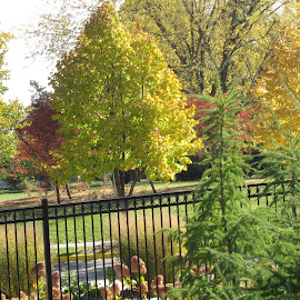 by Dawn Price - City,  Street & Park  City Parks ( fall, color, colorful, nature,  )