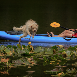 Abandon Ship by Paul Judy - Animals - Dogs Playing ( child, playing, lake, sierra, kayak, dog )