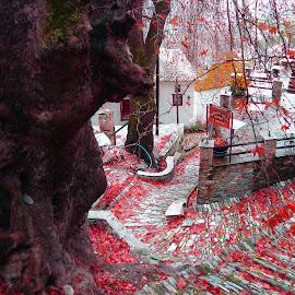 Makrinitsa by Stratos Lales - City,  Street & Park  Street Scenes ( red, volos, path, pelion, leaves )