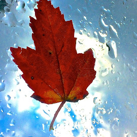 Leaf on Windshield by Tyrell Heaton - Instagram & Mobile iPhone ( leaf, iphone )
