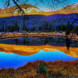 Reflections by Terry Ricks - Nature Up Close Water ( water, grass, colorado, trees, lake, rocky mountain national park, pond )