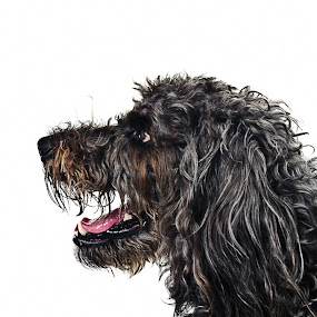 Fun with Rio by Judith Grieves - Animals - Dogs Portraits