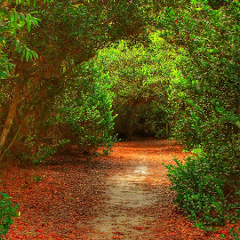 by Aggie Janowska - City,  Street & Park  City Parks ( red, nature, tree, path, road )