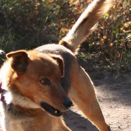 4 Off the Floor (1998 Iditarod Finisher - Smokey) by Lora Treat - Animals - Dogs Running