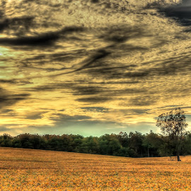 On the way home by Voicu Lupan - Landscapes Prairies, Meadows & Fields ( field, orange, kitchener, sunset, ontario )