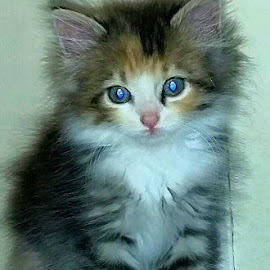 New Kitty by Kelly Templeton - Animals - Cats Kittens