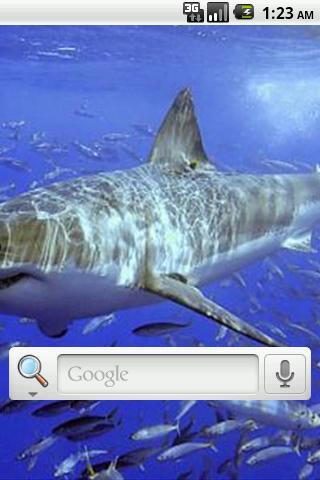 近海魚類動態壁紙