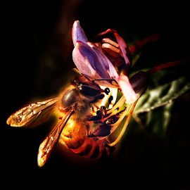 This Time by Marcelino Moningka - Animals Insects & Spiders ( macro, nature, bee, macro photography )