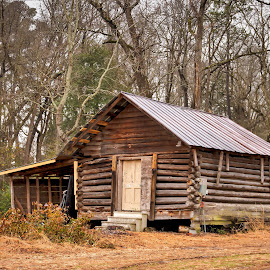 Old Log House by Carol Plummer - Buildings & Architecture Decaying & Abandoned ( building, old, house, decaying, log, abandoned )