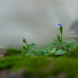 untitled by Rob De Eduardo - Nature Up Close Other plants ( up close, macro, nature, green, flower )