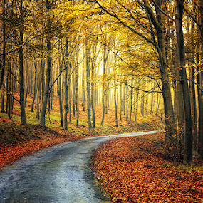 Autumn Journey pt.13 by Zsolt Zsigmond - Landscapes Forests ( fall leaves on ground, autumn, fall, forest, yellow, road, light, woods,  )