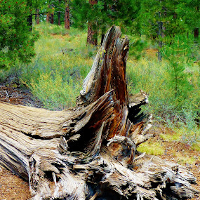 by Samantha Linn - Nature Up Close Trees & Bushes