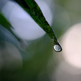 by Dan Kane - Nature Up Close Water ( macro, fall, trees, scenery )