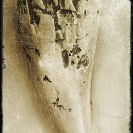 Tyranosaurus Rex Tooth by Kenneth Bullard - Animals Reptiles ( old, dinosaur, black and white, tooth, museum )