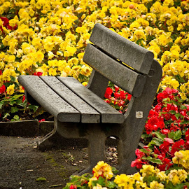 Sit in bloom by Gary Chadbond - Artistic Objects Furniture ( colour, wooden, bench, seat, rest, flowers, public, furniture, object )