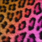 Pretty Cheetah Keyboard Skin icon