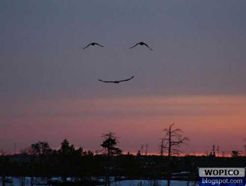 Smile on the Sky