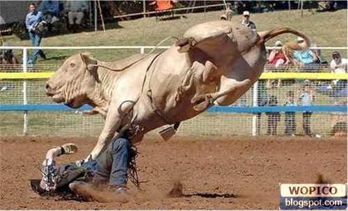 Bull Stomp