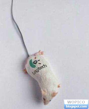 Real Looking Mouse