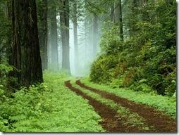 カリフォルニアのレッドウッド ステート パークの森の小道。