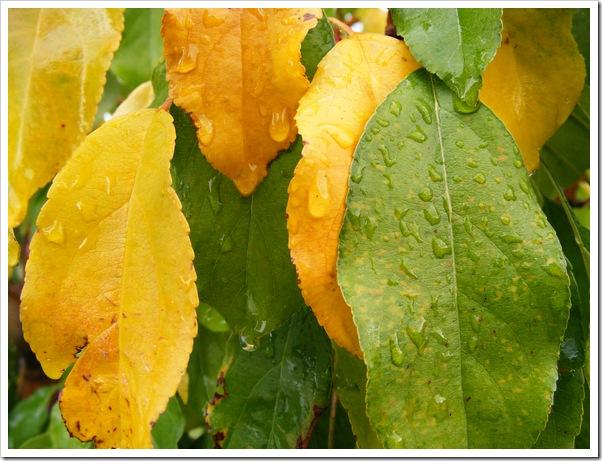 Yellow Leaf 3