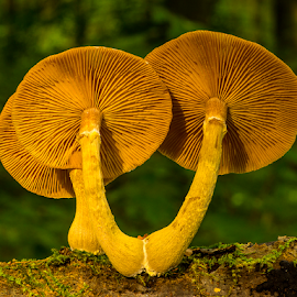 Big Wheels by Peter Samuelsson - Nature Up Close Mushrooms & Fungi