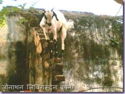 Goat on Slope 2
