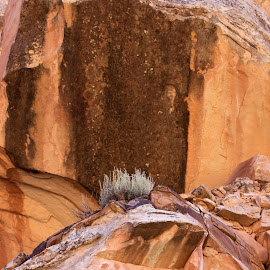 Lines in the Rock by Darlene Dunnum - Nature Up Close Rock & Stone ( rock formations, utah, striped rock, red rock, rocks )