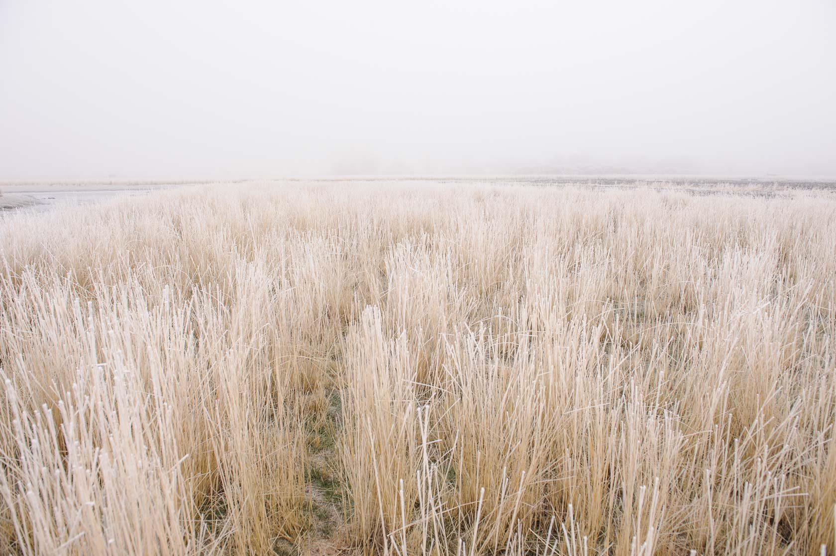 Wetland Reserve, Northern California