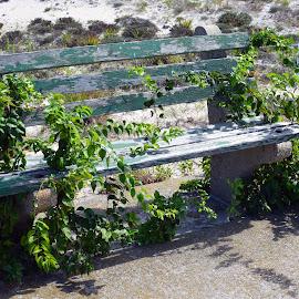Waiting long ? by Paul Pecora - City,  Street & Park  City Parks ( color, park bench, waitin g, weeds growing )