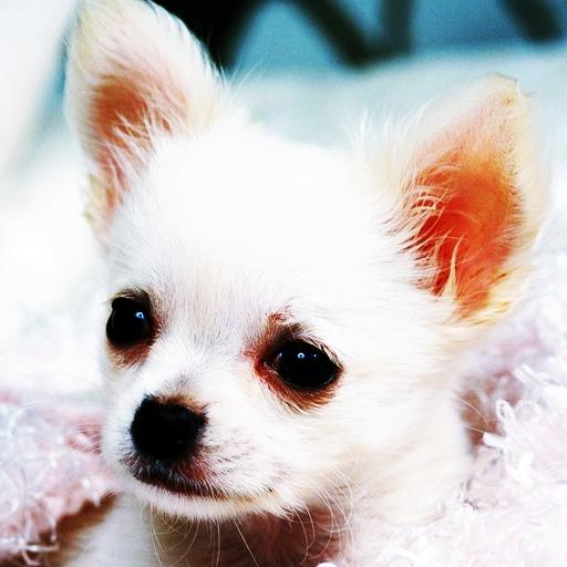 3 차원 귀여운 강아지 68 休閒 LOGO-玩APPs