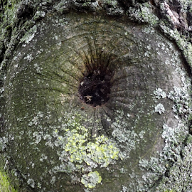 Tree trunk by Jenny Linsel - Nature Up Close Trees & Bushes