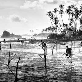 Stilt Fishermen by William Cheang - Landscapes Travel ( bkack and white, stitl fishing, sri lanka )