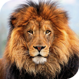 Lion HD Live Wallpaper