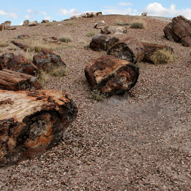petrified forest by Debbie Theobald - Nature Up Close Rock & Stone ( natural light, nature, arizona, unedited, rocks,  )
