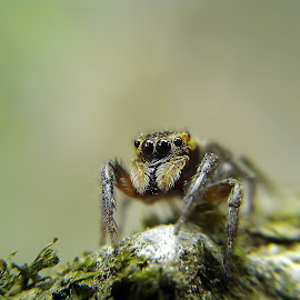spider by Hendrata Yoga Surya - Instagram & Mobile Android