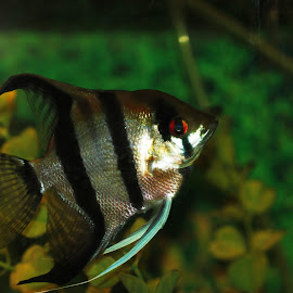 by Luiz Guimaraes - Animals Fish