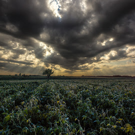 A light shines through by Aaron Groen - Landscapes Prairies, Meadows & Fields ( clouds, field, break, ray, aaron groen, homegroen photography, beams, south dakota, sioux falls, sun, rows )