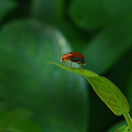 shining red by Arnab Bhattacharyya - Animals Insects & Spiders