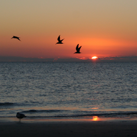 Sunset over the Gulf with Birds by Jim Powell - Landscapes Sunsets & Sunrises ( sunset, gulf of mexico )
