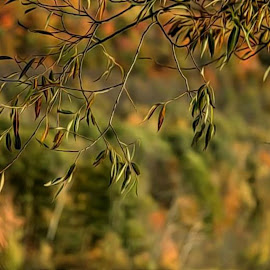 Frontline by DeDe PalmerWells - Nature Up Close Leaves & Grasses ( up close, colorful, autumn, fall, leaves )