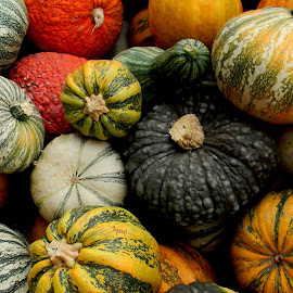 No gourd shortage in Oregon! by Liz Hahn - Nature Up Close Gardens & Produce