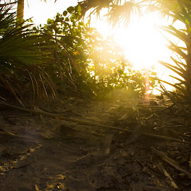 by Aires Spaethe - Nature Up Close Sand ( palm tree, sand, florida, sunset, trail, path, ocean, beach )