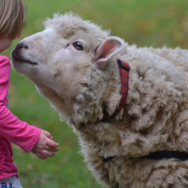 Love at first site  by Dawn Marie - Novices Only Street & Candid ( love, notdinner, rescue, daughter, lamb )
