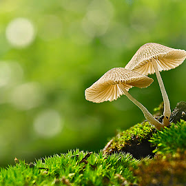 by Suhaimi Azzura - Nature Up Close Mushrooms & Fungi ( mushroom, nature, natural )