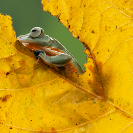 warm by Robert  Fly - Animals Amphibians (  )
