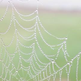 by RichandCheryl Shaffer - Nature Up Close Webs