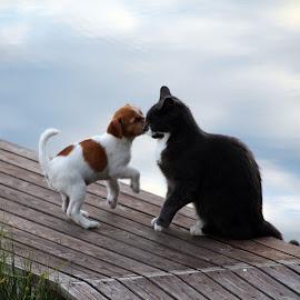 by Ann-Sofie Sköld Åberg - Animals - Cats Playing (  )